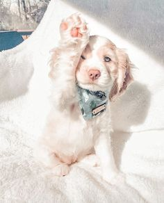 Super Cute Puppies, Baby Animals Super Cute, Cute Wild Animals, Cute Baby Dogs, Cute Little Puppies, Cute Dogs And Puppies, Cute Little Animals, Cute Funny Animals, Doggies