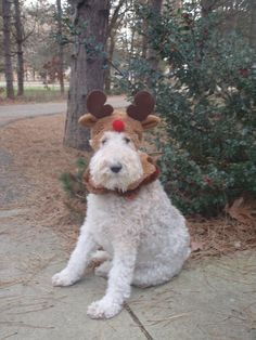 Reindeer for a day! ~ Wire Fox Terriers