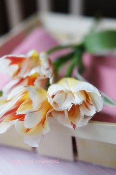 ハッピージェネレーション 春を待つ|JOY-PHOTO!
