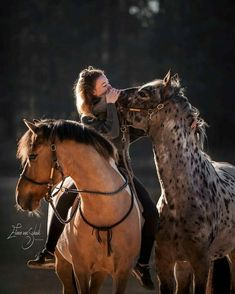 There are such a lot of horse breeds that it'd take a whole book to hide the topic. A breed for each purpose, horses are available in all shapes, colors. Cute Horses, Pretty Horses, Horse Love, Beautiful Horses, Animals Beautiful, Funny Horses, Cute Baby Animals, Animals And Pets, Funny Animals