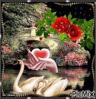 See the PicMix Swans, roses and a heart. belonging to StellaStai on PicMix. Swans, Good Morning Beautiful Pictures, Pictures Of Jesus Christ, Rose, Simple, Creative, Venus, Guy, Heart