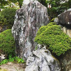 Shobo-hi#kyoto #kyototouristinfo #kyototourguide #japantrip #japantravel #travel #japan #garden #japanesegarden #discoverkyoto #discoverjapan #shoboji #buddhism #karikomi #art #culture #日本庭園 #庭 #石