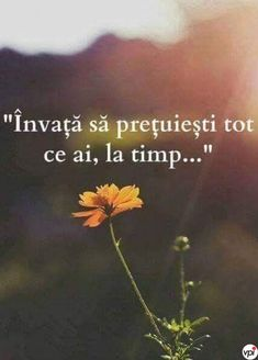 Învață să prețuiești ce ai! - Viral Pe Internet Motivational Quotes, Inspirational Quotes, Spirituality, In This Moment, This Or That Questions, Quotes Motivation, Instagram, Buddha, Zen