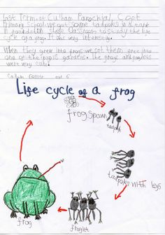 Callum Collier, 6, has drawn an excellent picture of the life cycle of a frog. Brilliant tadpoles! Natalie - BBOWT #bbowt #wildlife