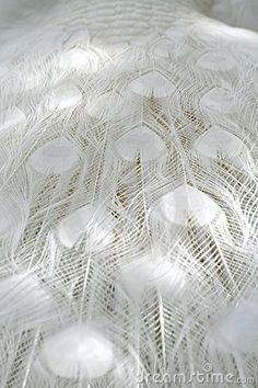 white peacock feathers #white