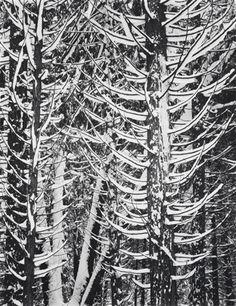 Deze foto is gemaakt door Ansel Adams en hij heet Winter forest detail. De datum is niet bekend.