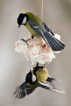 #Fotografia #birds
