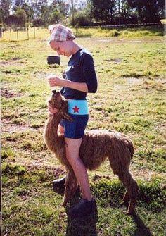 volunteer opportunities with alpacas!