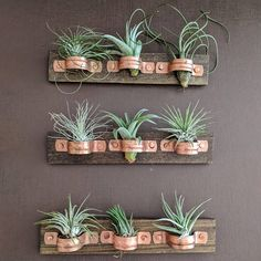 Hanging Air Plant Wall Plaque with Copper Holders and Three Air Plants Each piece is handcrafted Your custom order will include: • 3 carefully selected variety of healthy Air Plants • One 1.5x7 inch wood plaque with 3 copper holders for displaying your air plants • Hardware on back