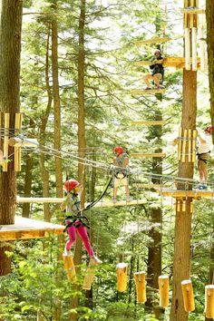 Walk through treetops to see beautiful natural Massachusetts!