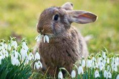 Los datos más curiosos del Conejo #curiosidades #curiosfera @curiosfera