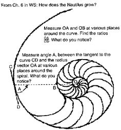 Comparing spirals for the Nautilus shell, the Fibonacci numbers and the Equal Tempered Chromatic Music Scale Nautilus Shell, Line Drawing, Tangled, Portal Office, Shells, Doodles, Letters, Art Things, Spirals