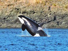Orca Aware: A Superpod at Superpod!