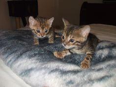 Kira et sa sœur quelques semaine après la naissance
