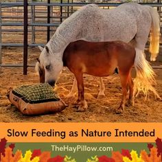 Slow Feed Hay Bags & Nets - Best for Ground Feeding Back Strain, Horse Shelter, Slow Feeder, Horses, Nature, Animals, Health, Animales, Salud