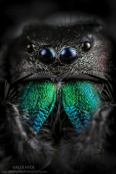 3d Wallpaper Background, Wallpaper Backgrounds, Itsy Bitsy Spider, Jumping Spider, Nature Pictures, Bugs, Creatures, Canvas Prints, North America