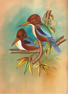 Kingfisher Bird Art