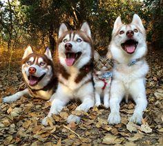 【画像】猫が犬に育てられた結果wwwwwwwww : 暇人\(^o^)/速報 - ライブドアブログ