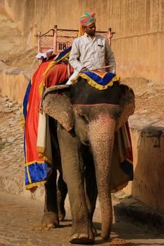 Elephant in the fortress of Amber (India) | Eléphant à la forteresse de Amber (Inde) | Elefante en la fortaleza de Amber (India)