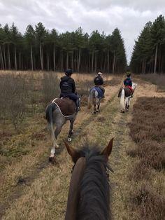 Cute Horses, Pretty Horses, Horse Love, Beautiful Horses, Baby Horses, Horse Photos, Horse Pictures, Trail Riding, Horse Riding