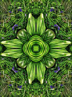 Sissinghurst Kaleidoscopes