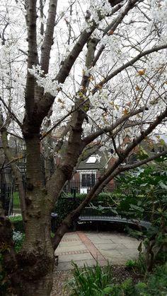 LONDRA - 19 MARZO 2017 - :: Ljuba