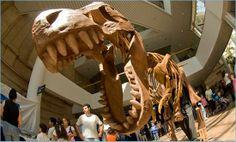 Denver Museum of Nature & Science Denver | Mark's List