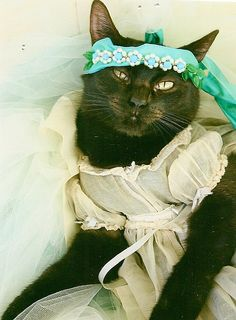 Miss Kitty models a vintage baby dress and a sash (& she's not too happy about it).