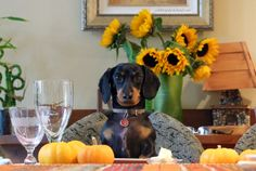 Happy #Thanksgiving !