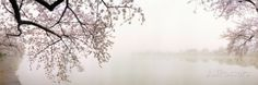 Cerejeiras a beira do lago, Washington, DC, EUA Impressão fotográfica
