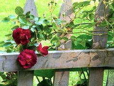 Les jardins en Juin - Le cottage de Gwladys