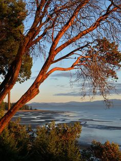 Items similar to Parksville Rathtrevor Beach 2 on Etsy Arbutus Tree, Beach Portraits, Vancouver Island, Sandy Beaches, How To Be Outgoing, 2 In, The Great Outdoors, Road Trip, Coast