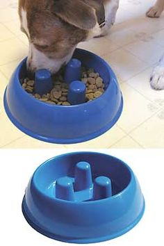 Anti-Bloat Bowl - perfect for Holly who eats too fast