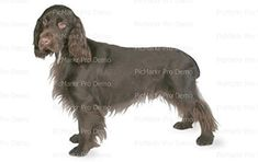 12 Sheet  Field Spaniel Edible CakeCupcake Party Topper ** Want to know more, click on the image.(This is an Amazon affiliate link and I receive a commission for the sales)