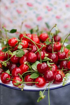 Cherries. Fresh picked with the stems on to keep them fresher....