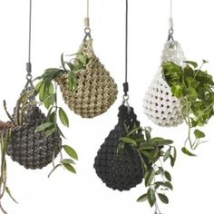 1.knotted-plant-pod-650x433