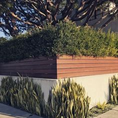 Top 50 Best Privacy Fence Ideas - Shielded Backyard Designs Cheap Privacy Fence, Yard Privacy, Diy Fence, Backyard Fences, Backyard Landscaping, Fence Ideas, Backyard Designs, Pallet Fence, Fence Art