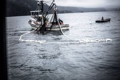 Hauling the net.  Targeting pink salmon in Prince William Sound.  Photo by Thomas Lopez.  www.seafoodapparel.com