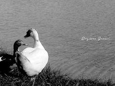 Lago do Major - Atibaia/SP