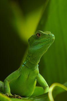 verde que te quero verde