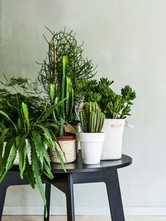 Why men need plants in their home Cactus House Plants, House Plants Decor, Garden Plants, Indoor Garden, Indoor Plants, Dream Garden, Home And Garden, Interior Design Plants, Plant Table