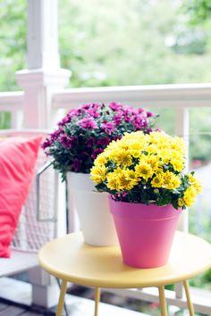 Verspielte Chrysanthemen. #pflanzenfreude