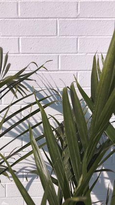 - Photography, Landscape photography, Photography tips Iphone Wallpaper Vsco, Plant Wallpaper, Phone Screen Wallpaper, Summer Wallpaper, Love Wallpaper, Nature Wallpaper, Mobile Wallpaper, Wallpaper Backgrounds, Wallpaper Quotes
