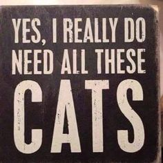 Gift Ideas for Cat Lovers: Hilarious Wooden Cat Signs Crazy Cat Lady, Crazy Cats, Cat Signs, Animal Signs, Animal Decor, Wooden Cat, Primitive Homes, Cat Decor, Cat Quotes