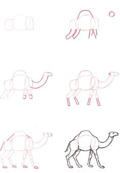 How To Draw A Camel Illustrations Illustrators Animal Drawings