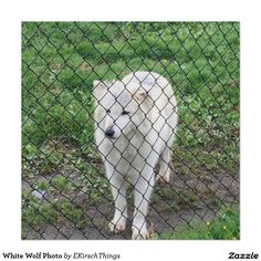 White Wolf Photo Poster