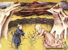 Codex Granatensis. Mujeres recogiendo cilantro    Autor:  Fecha: Siglo XV