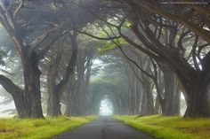 Myst by Patrick Smith, on the way to the Point Reyes Lighthouse - Marin County, north of San Francisco, USA