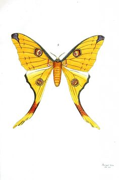 Animal - Insect - Butterflies -  Any animals, birds insects. Plants. Such an awesome resource!