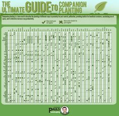 massive, thorough, companion planting graph/guide